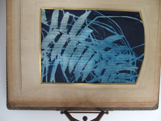 Cyanotype of tracing paper