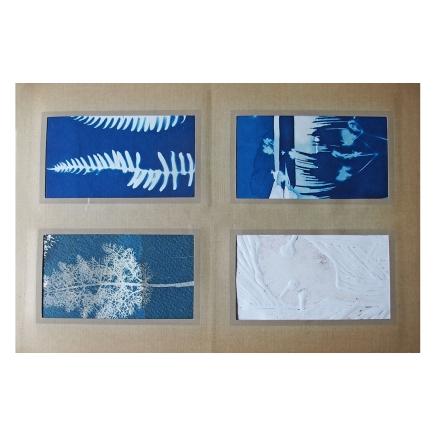 Album of cyanotypes