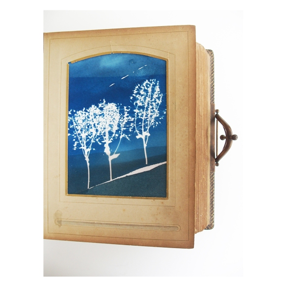 Album of cyanotypes and embossing
